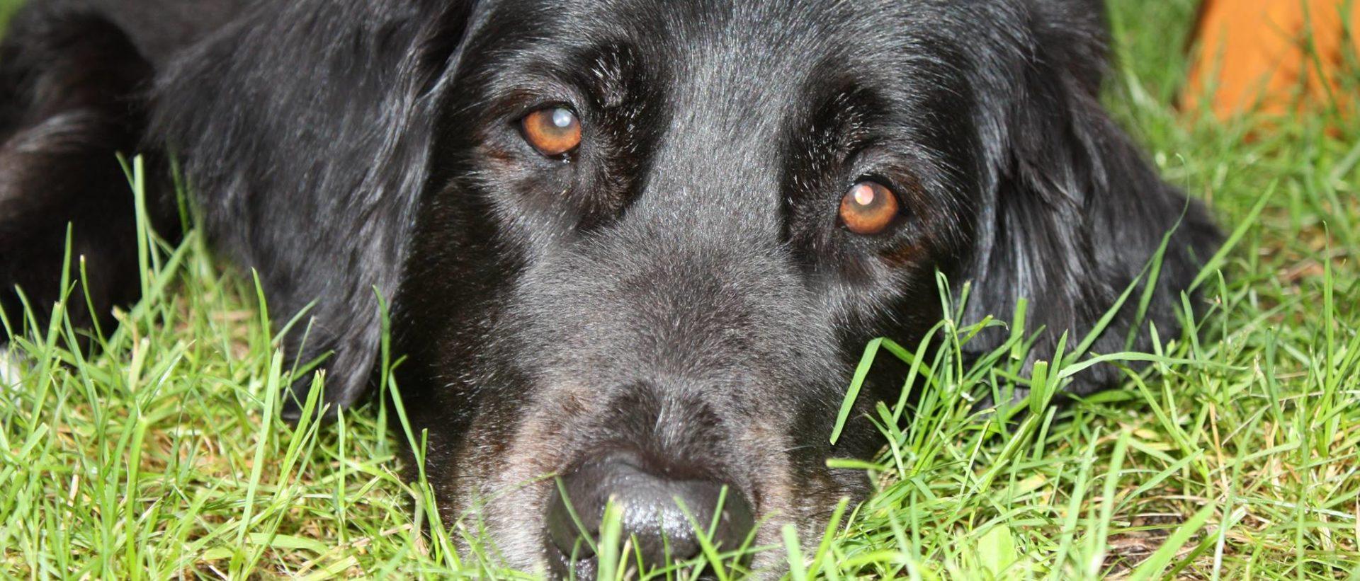 Hundomplaceringsverksamheten